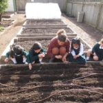 Planting Carrot Seeds in the Garden